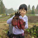 【イベント終了】10/9,10/15,11/3開催 さつまいも掘り&石窯ピザづくりイベント